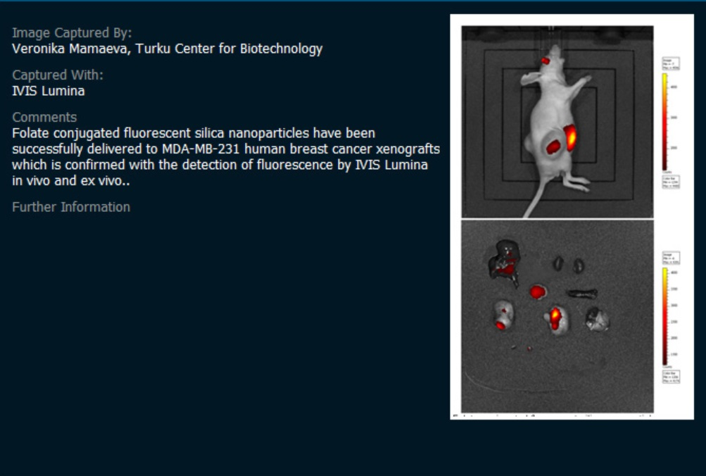 IVISで撮影したマウスとその臓器の画像